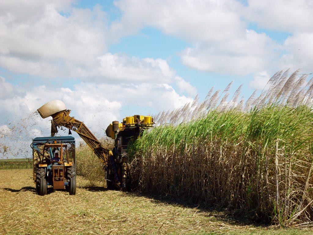 sugar-cane-harvesting-1553007-1024x768