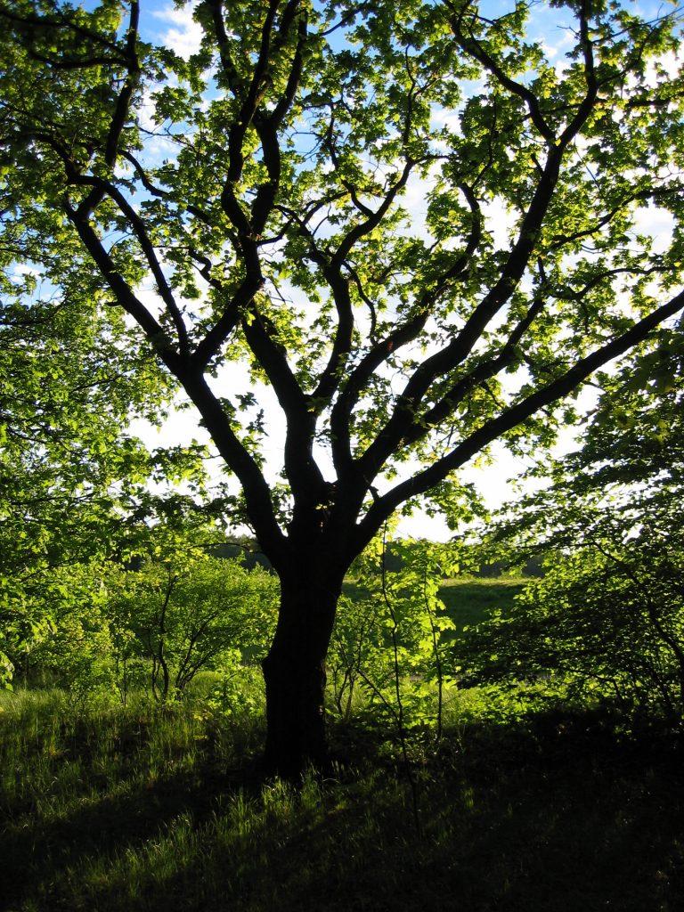 tree-1494188-768x1024