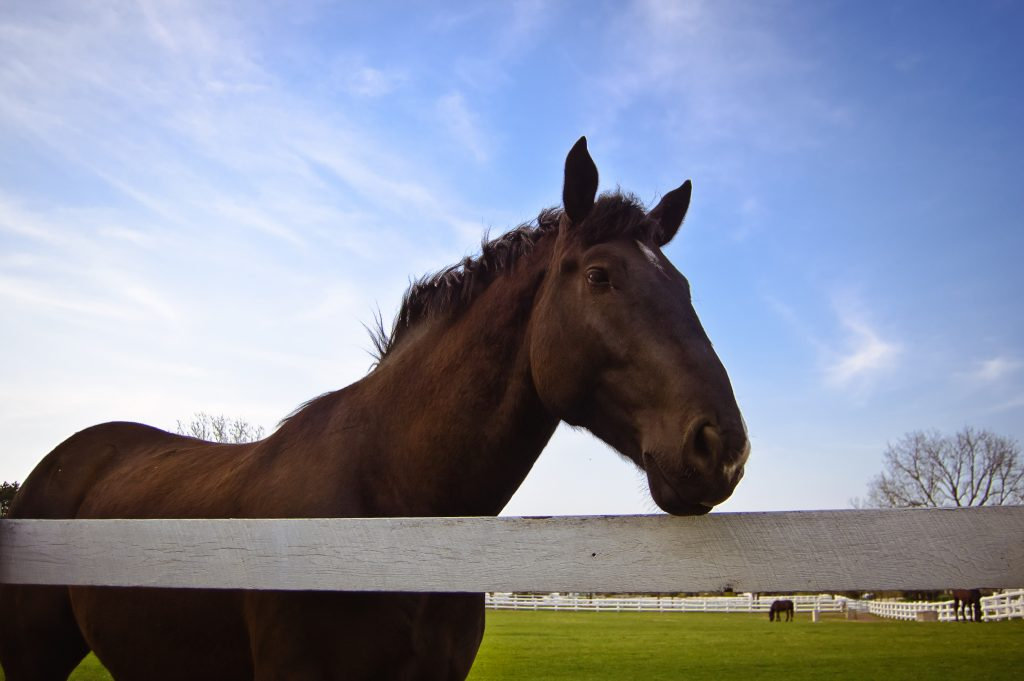 horse-at-fence-1344364-1024x681