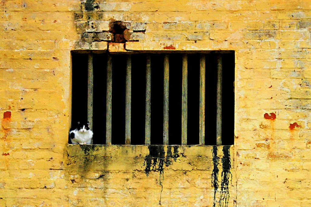 cat-in-jail-1369156-1024x683
