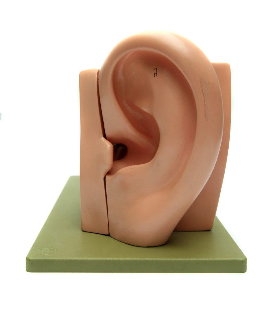ear-1419038-905x1024