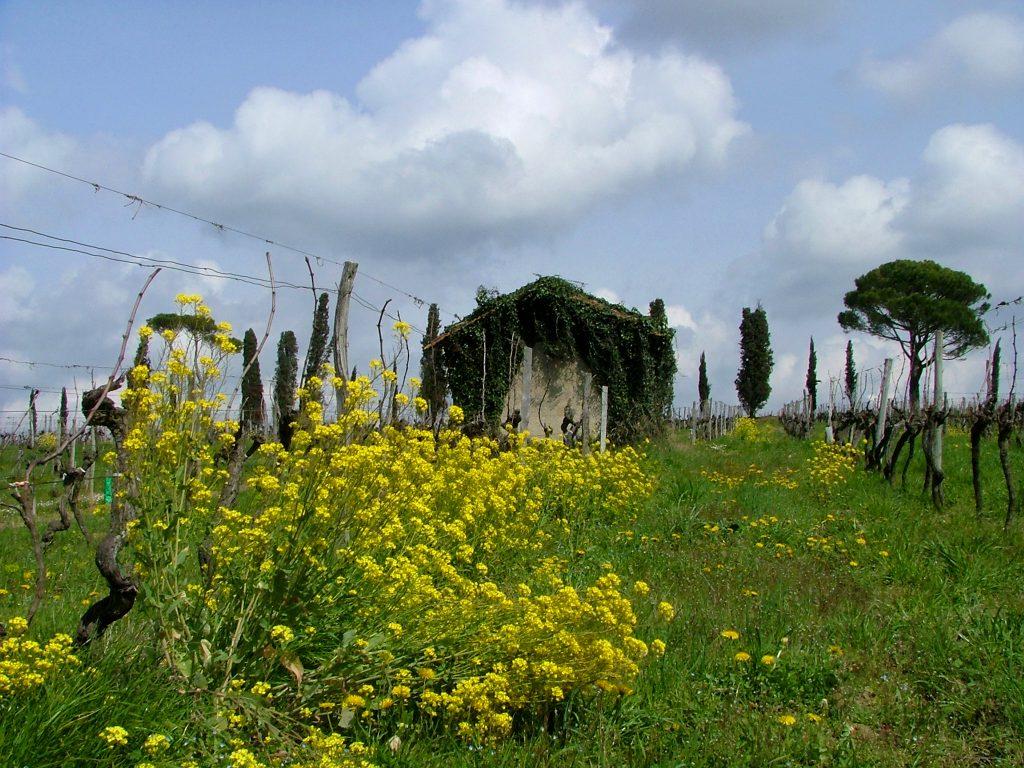 les-landes-mauriac-france-1492015-1024x768