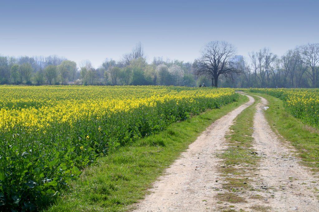 farm-track-1375641-1024x683