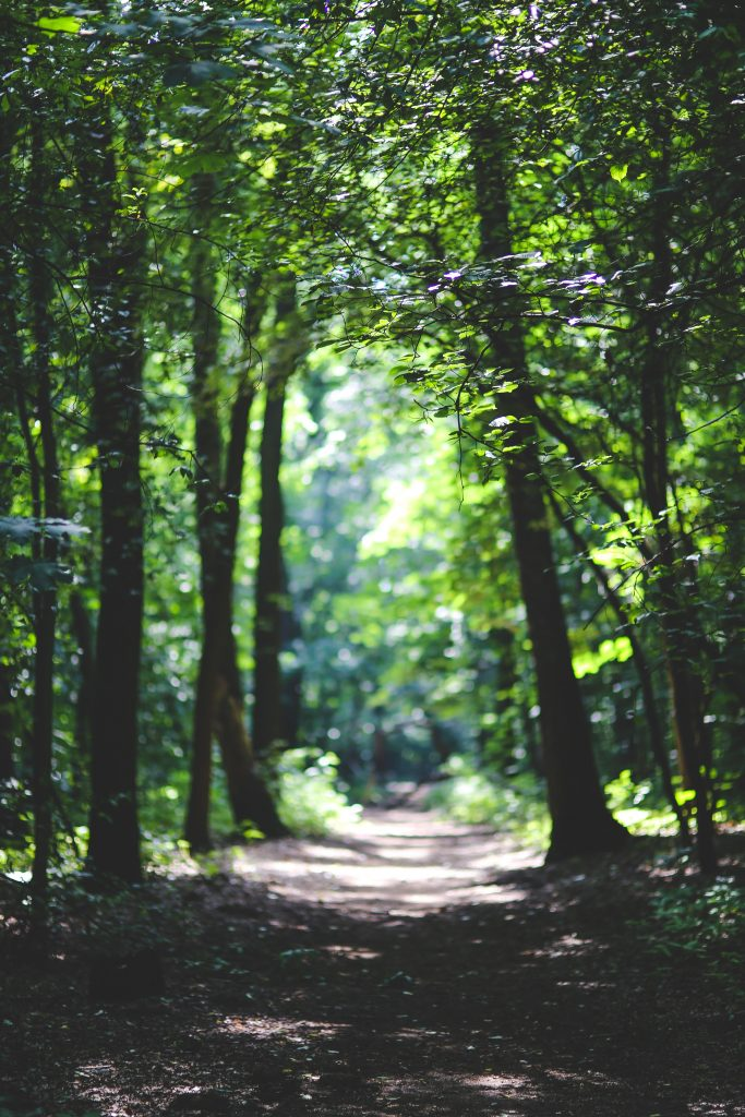 the-path-among-the-trees-6037-683x1024